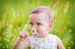 Kleines Mädchen mit dem Gänseblümchen Stockbilder