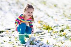 Kleines Mädchen mit Krokus blüht unter Schnee im Frühjahr Lizenzfreies Stockbild