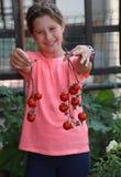 Kleines Mädchen mit rosa T-Shirt, das rote Tomaten ausgewählt hat Stockfotos