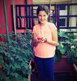 Kleines Mädchen mit Tomaten in ihrer Hand in ihrer Terrasse mit Anlagen Lizenzfreies Stockbild