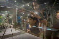 Kleines Mädchen am nationalen Wissenschafts-Museum Lizenzfreie Stockfotografie