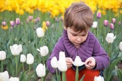 Kleines Mädchen schaut auf weißer Tulpe Stockbild
