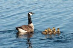 Kleines Mädchen und ihre Mutterschwimmen im Meer Stockbilder