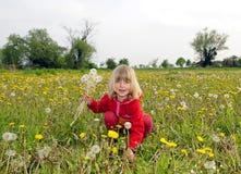 Kleines Mädchen wählt Löwenzahn aus Stockfoto