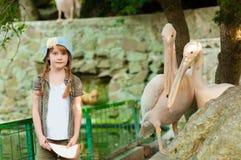 Kleines Mädchen am Zoo mit Pelikanen lizenzfreie stockfotos
