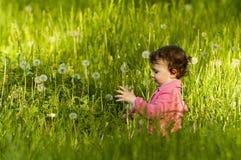 Kleines Mädchen, das auf einem Löwenzahngebiet spielt Lizenzfreies Stockfoto
