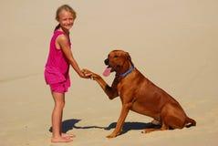 Kleines Mädchen, das Hundetatze rüttelt Stockfoto