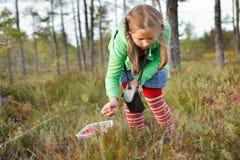 Kleines Mädchen, das wilde Moosbeeren auswählt Stockbild