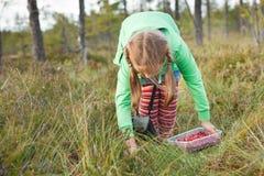 Kleines Mädchen, das wilde Moosbeeren auswählt Lizenzfreie Stockbilder