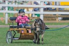 Kleines Mädchen im Miniaturpferdewarenkorb am Land angemessen Stockfotografie