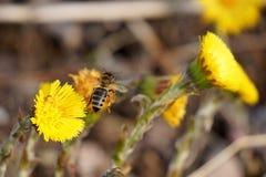 Kleines Mädchen ist Bienenkostüm Lizenzfreie Stockfotos
