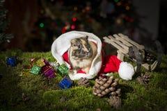 Kleines Meerschweinchen innerhalb Santa Claus-Hutes Lizenzfreies Stockbild