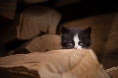 Kleines Miezekatzeverstecken stockfoto