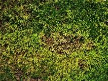 Kleines Moosgrün des Herbstes mit Gelb und Braun Lizenzfreie Stockbilder