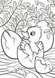 Kleines nettes Entlein ausgebrütet vom Ei Stockfotos