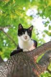Kleines nettes Kätzchen, das hoch auf einem Baum sitzt und vorwärts zu schaut stockbild