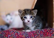 Kleines neugieriges Kätzchen. Stockfoto