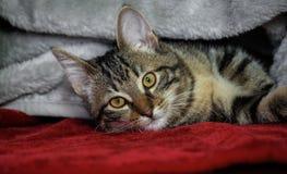 Kleines nicht reinrassiges gestreiftes Kätzchen, das auf seiner Seite, gelb mit grünen Augen liegt stockbilder