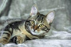 Kleines nicht reinrassiges gestreiftes Kätzchen, das auf seiner Seite liegt lizenzfreies stockbild