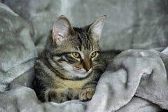 Kleines nicht reinrassiges gestreiftes Kätzchen liegt auf einer grauen Wolldecke, ruhig stockbild