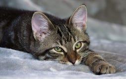 Kleines nicht reinrassiges gestreiftes Kätzchen liegt auf einer grauen Wolldecke, schläfrig lizenzfreie stockfotos