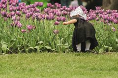 Kleines niederländisches Mädchen unter den Tulpen Stockbilder