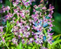Kleines Orchideenblühen Stockbild