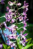 Kleines Orchideenblühen Stockfotografie