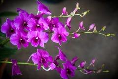 Kleines Orchideenblühen Stockfotos