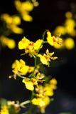 Kleines Orchideenblühen Lizenzfreie Stockfotos