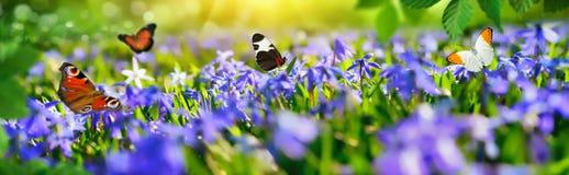 Kleines Paradies mit Frühlingsblumen und -schmetterlingen stockfotografie