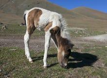 Kleines Pferd Stockfoto