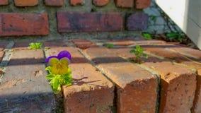 Kleines Purpurrotes der Blume und gelb lizenzfreies stockfoto