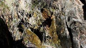 Kleines Rieseln des Wassers fallend unter Felsen und Anlagen stock video footage