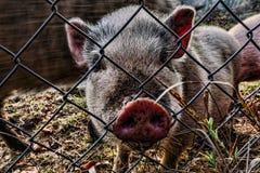 Kleines rosa Sparschwein Stockfoto