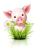 Kleines rosafarbenes Schwein im Gras lizenzfreie abbildung