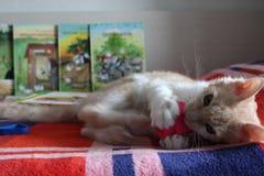 Kleines rotes Kätzchen lizenzfreies stockbild