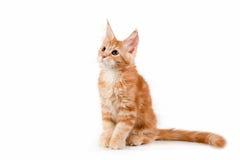 Kleines rotes Kätzchen, das auf weißem Hintergrund sitzt lizenzfreies stockfoto