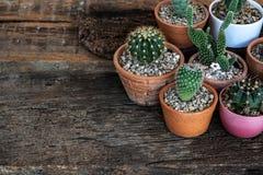 Kleines saftiges, Kaktus, Blument?pfe dekorativ auf alter h?lzerner Tabelle mit warmem Licht des Morgens stockbilder