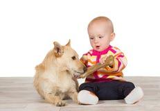 Kleines Schätzchen, das dem Hund einen Knochen anbietet Stockbild