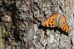 Kleines Schildpatt auf einem Baum lizenzfreie stockfotos