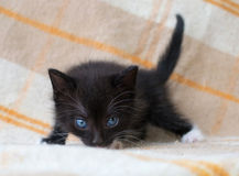 Kleines schwarzes Kätzchen Stockfotografie