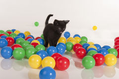 Kleines schwarzes Kätzchen, das mit bunten Kugeln spielt lizenzfreie stockbilder
