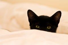 Kleines schwarzes Kätzchen des grünen Auges Lizenzfreies Stockbild