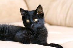 Kleines schwarzes Kätzchen drei Monate mit den großen gelben Augen, die auf einer beige Couch liegen Stockbild