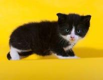 Kleines Schwarzweiss-Kätzchen, das auf Gelb steht Lizenzfreies Stockfoto