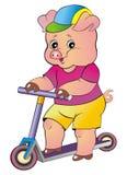 Kleines Schwein auf einem Skateboard Lizenzfreies Stockfoto