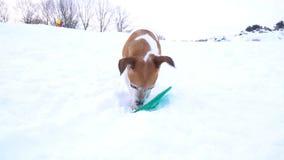 Kleines spielendes Haustier Lustiger Jack Russell-Terrier, der Spaß draußen hat Videoaufnahmenzeitlupe Erstaunlicher verschneiter stock video