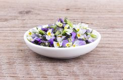 Kleines, violettes heartsease Stockfoto