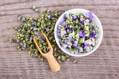 Kleines, violettes heartsease Stockfotografie